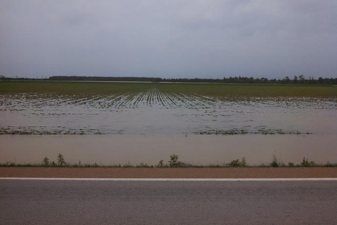 Flood farm June 2014 in Prairie County_-1420296172622626162