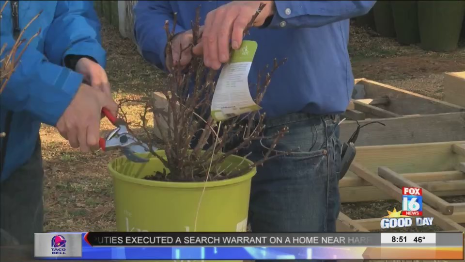 The_Good_Earth_Garden_Center__Pruning_in_0_20180214154443