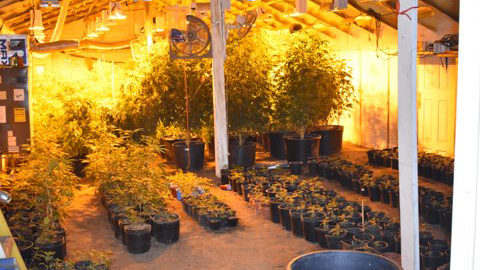 Deputies seized 758 marijuana plants from an illegal grow in eastern El Paso County Tuesday. The plants were growing in multiple outbuildings througho
