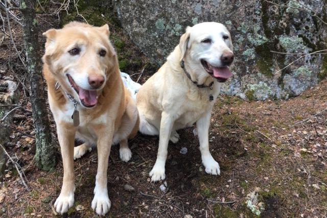 helton's dogs