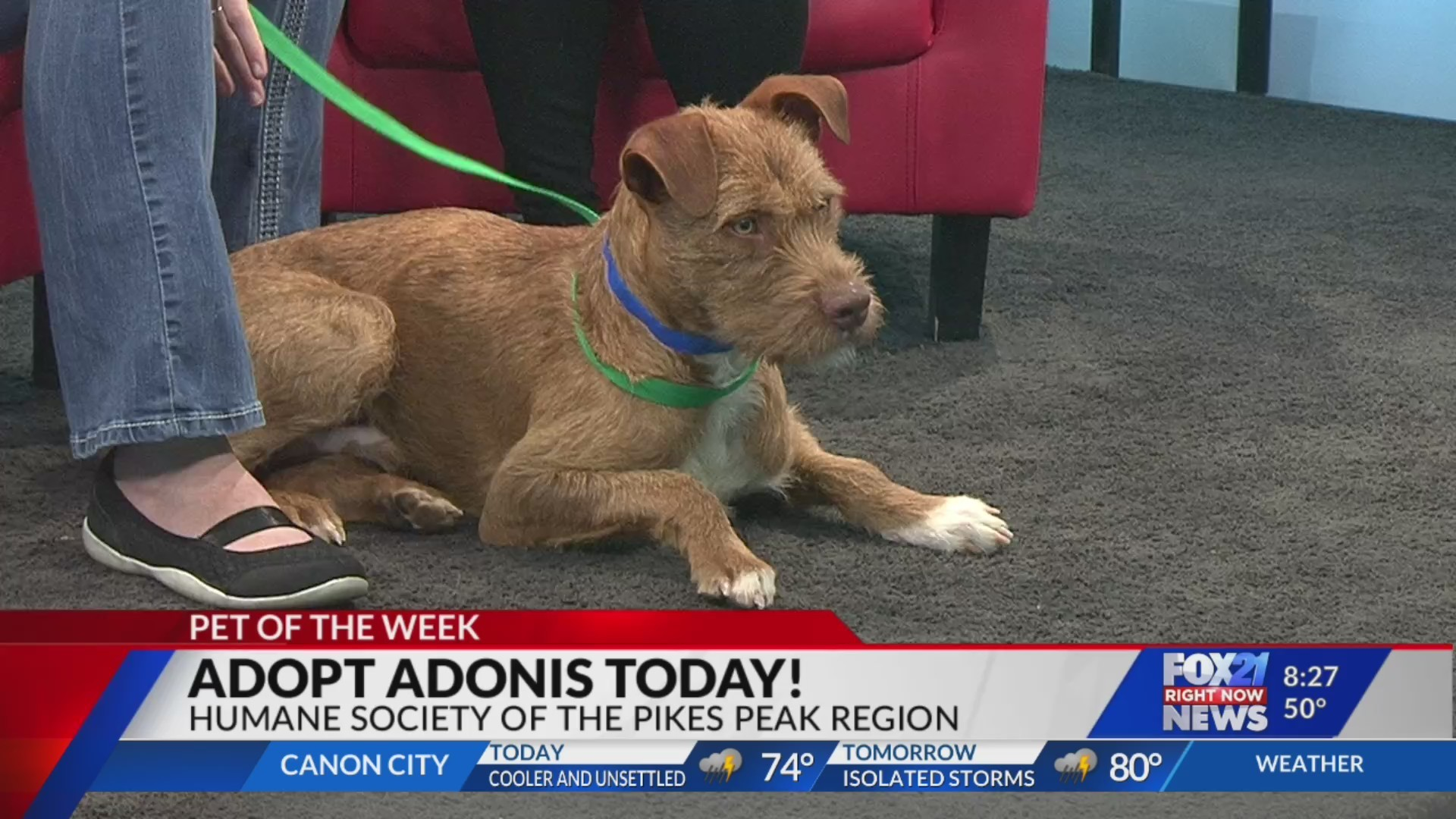 June 5 Pet of the Week: Adonis