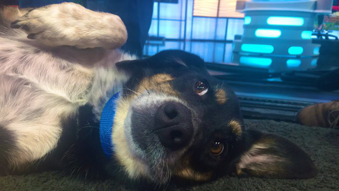 September 25 Pet of the Week, Nelson / Photo by Sam Widmer - FOX21 News
