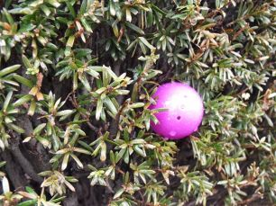 2015-easter-egg-hunt-211