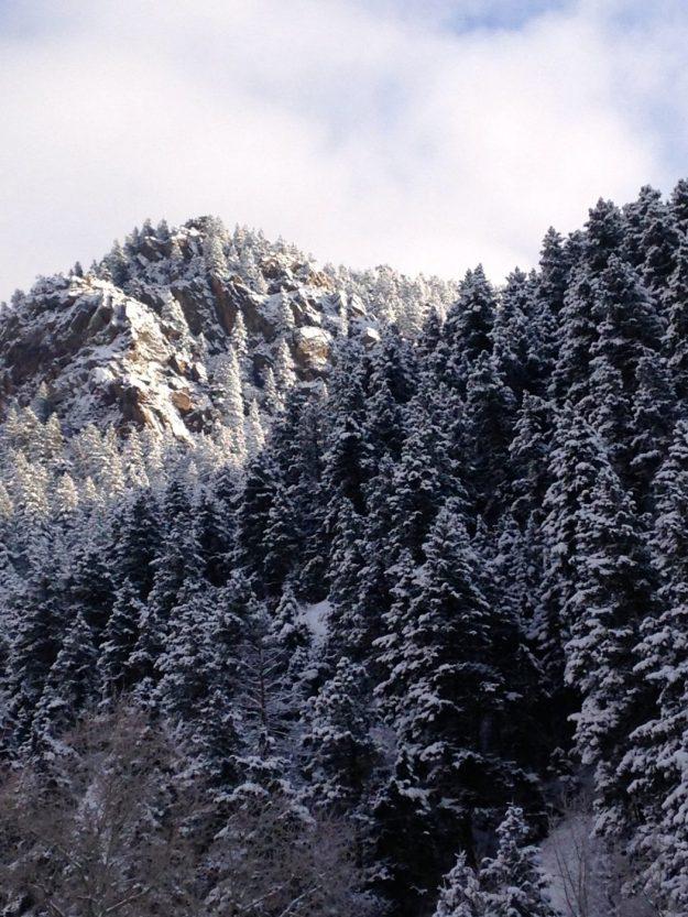 snowshoeing with a dog - winter wonderland