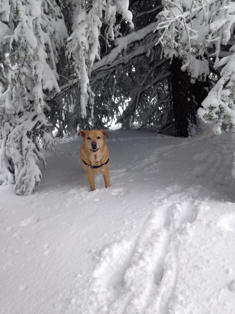snowshoeing with a dog - lots of snow