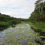 Travel to the Peruvian Amazon
