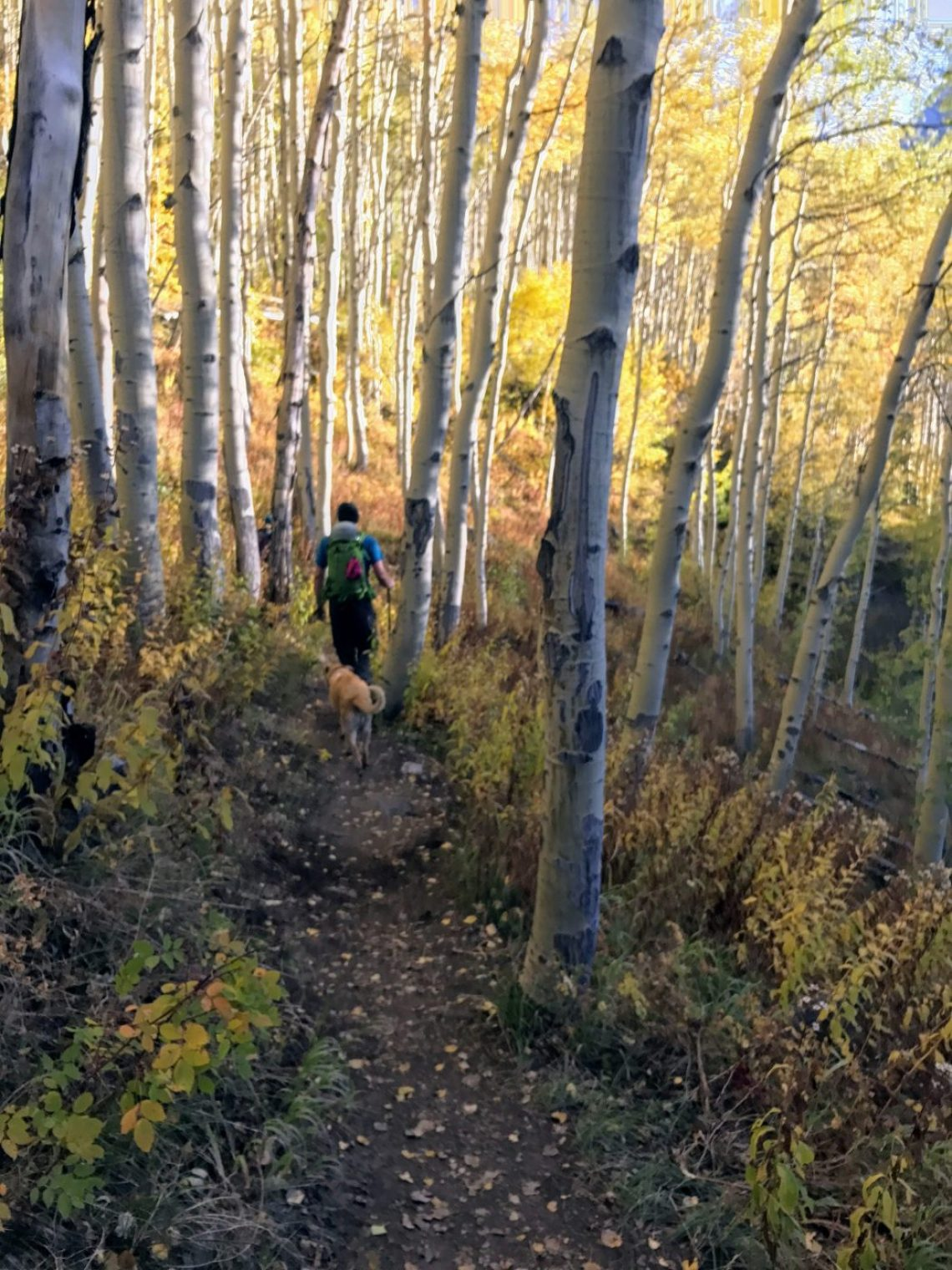 Upper Piney River Trail in Fall