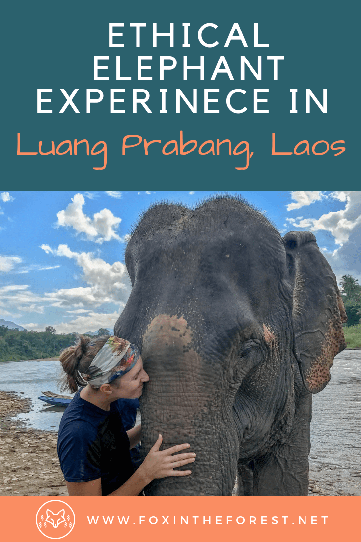 The premier ethical elephant experience in Luang Prabang, Laos. A no-ride elephant sanctuary in Laos. Bathe and hike with the elephants at this ethical elephant orphanage in Luang Prabang, Laos. #sustainabletravel #ethicaltravel #travel #southeastasiatravel #laostravel