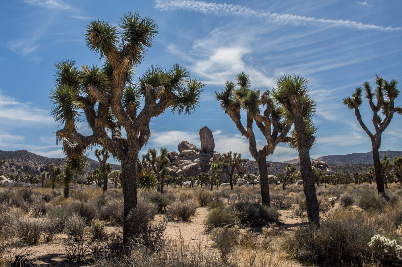 best joshua tree hikes