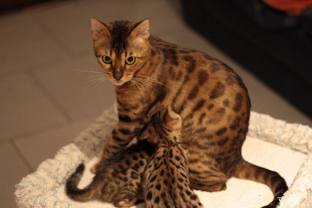 Scarlett O´Hara die Stolze Mama