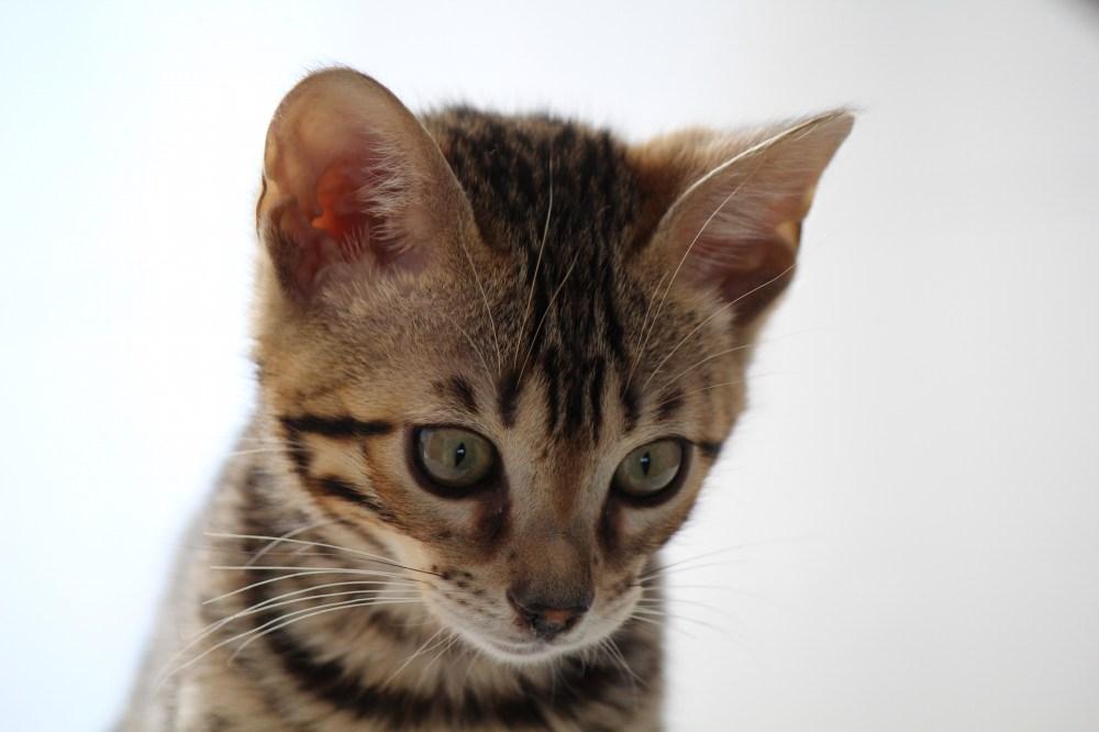 Kitten von Scarlett O´Hara und  John Wayne