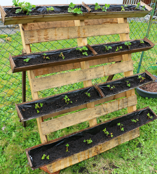 Boxes Gardening Elevated