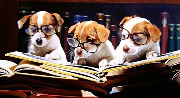 Mitos y costumbres sobre nuestras mascotas  Mascotas Foyel