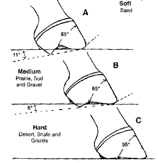 Wild Horse Hoof Pattern Offers