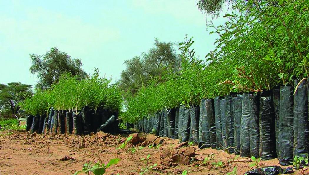 L'Afrique au centre des enjeux écologiques à la COP21 ?