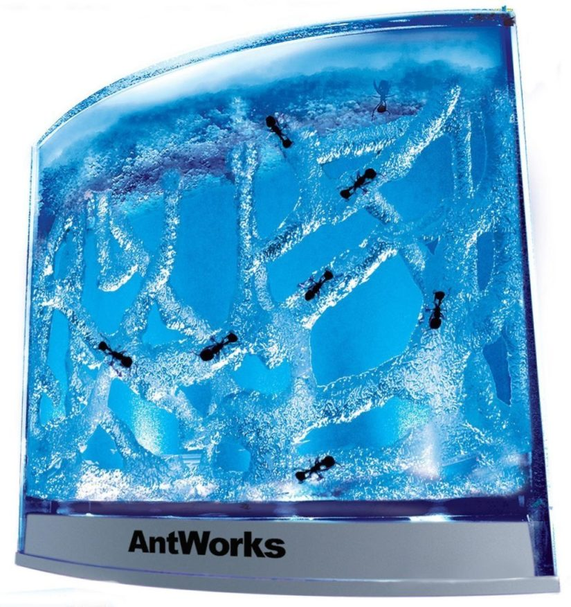 Fascinations-AntWorks-Illuminated-Blue