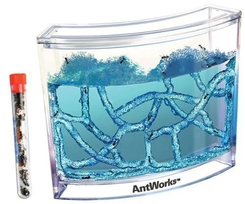 Live-Blue-Gel-Ant-Habitat-with-Live-Ants