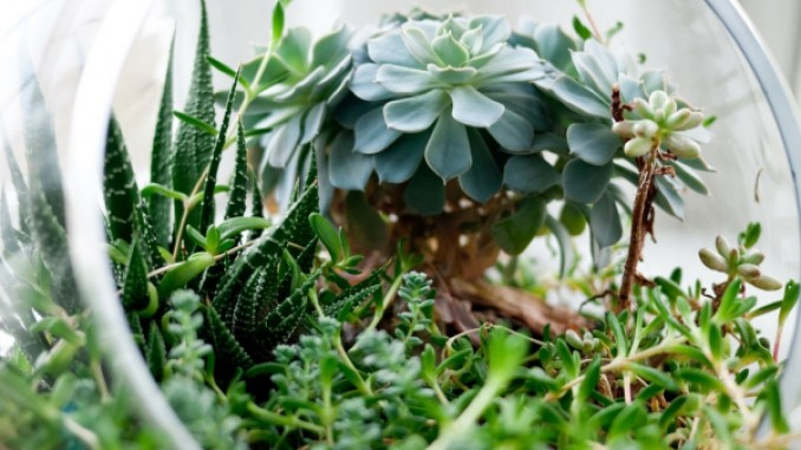 pflanzen richtig umtopfen - boisholz, Garten und erstellen