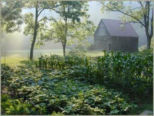 Garden of 2003