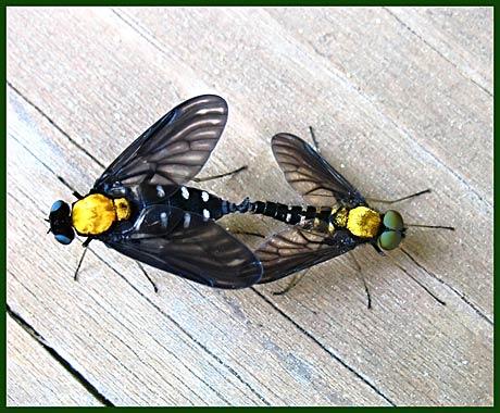 twoflies2.jpg