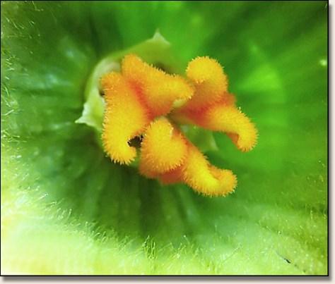 Butternut Squash bugs-eye view