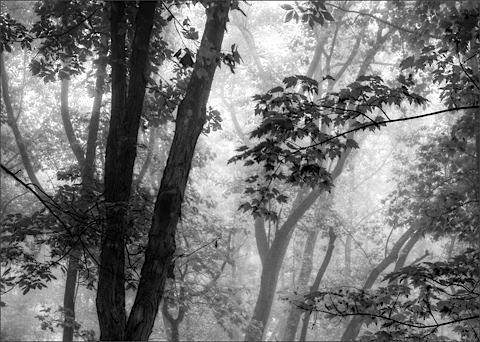 mysticwoods2.jpg