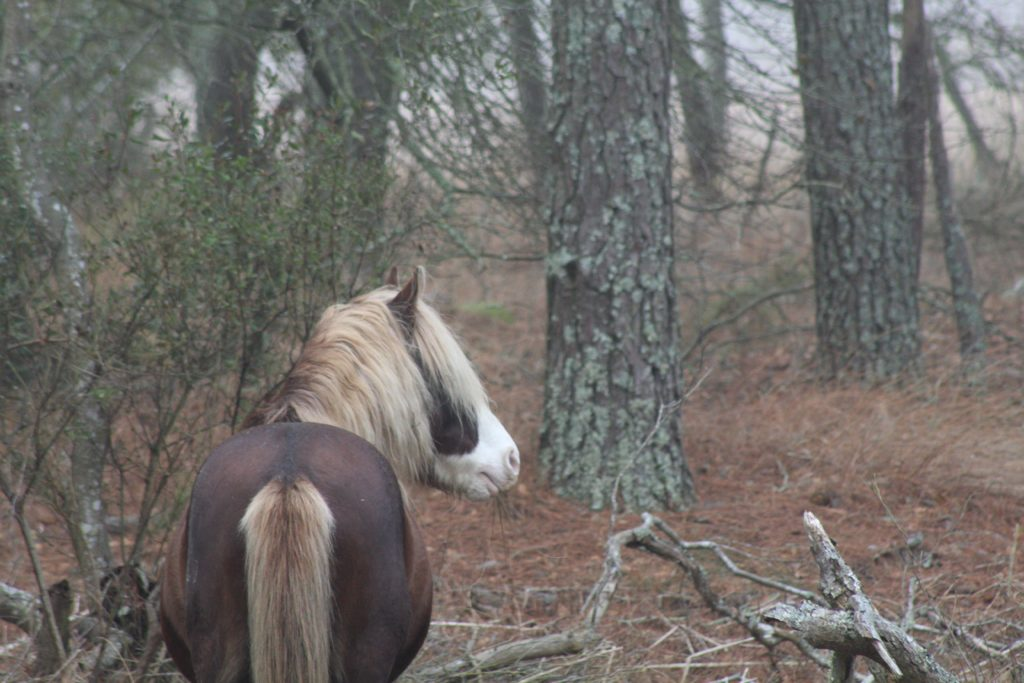 I did not attend Amy's funeral. Since her passing I have waited patiently for the opportunity to visit one of the places special to us and say goodbye in my own way.  Today my father drove me to Assateague National Seashore. It was a special place for Amy as well as myself.  There is a place in Assateauge where a channel feeds the large ponds that are home to countless migratory birds. Amy and I would spend entire days on this spot, Amy saw a kingfisher in the trees overhead one day, and ever since she was determined to get a picture of that bird.  Kingfishers can be wily, and she never got that photograph.  Today I went back to our spot. I finally said my goodbye, told her how much I loved her and dropped my wedding band into the water.  As the ring sank into the water Amy's kingfisher few out the brush across the channel, gave out a loud cry and flew into the foggy sky.  Farewell, my love. Godspeed.ony