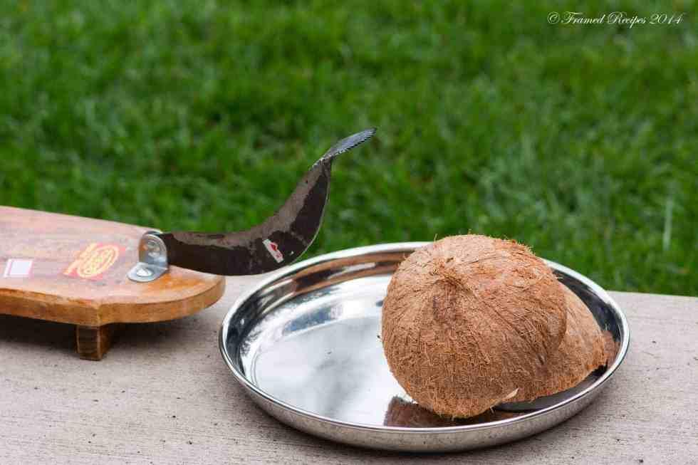 DSC_9358_Coconut_4
