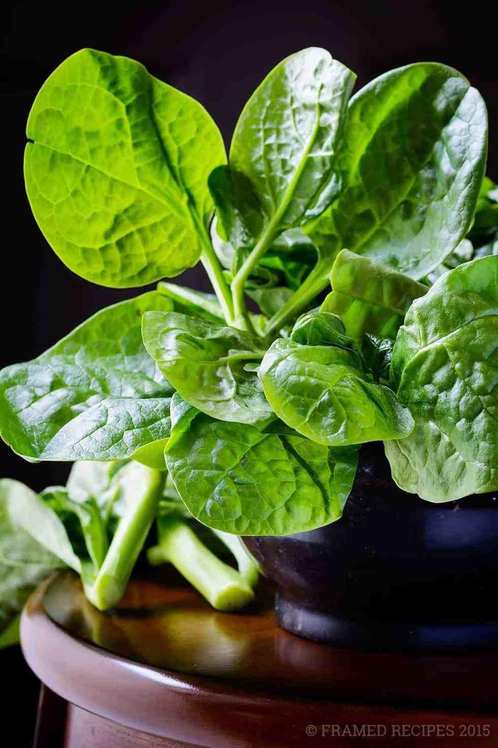 fresh Malabar spinach - learn how to keep spinach fresh