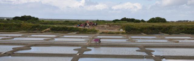 Guérande Salt Marshes