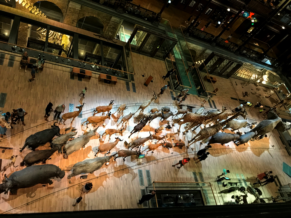 Gallery of Evolution, 7000 Animals on the March- France Travel Info