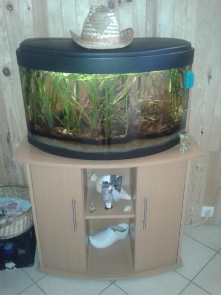 Troc Echange Aquarium Avec Meuble Poisson Equip Sur
