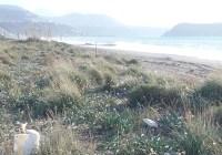 Italia Nostra: «Al Comune di Praia a Mare solo ambientalismo di facciata»