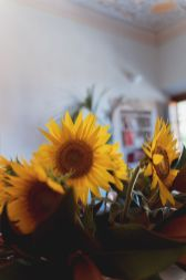 Sunflowers | Villa la palagina resort