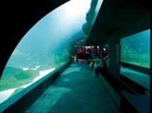 Paris Aquarium - Visit And Tickets