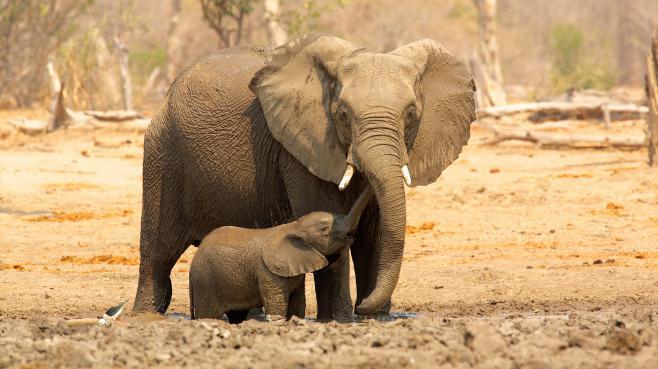 Des éléphants dans un parc du Zimbabwe, le 20 juin 2013.