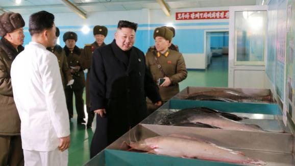 Sur cette photo de propagande, le leader nord-coréenne inspecte des poissons-chats dans une usine de Samchon, dans le sud du pays.