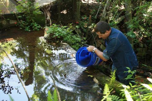 O agente de Endemias, Aurio, despeja alguns alevinos em riacho que percorrerá parte da cidade em galerias pluviais