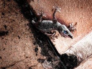 Lizard: Climb. Be inspired. Be Memorable. Live. Photo by Franco Esteve
