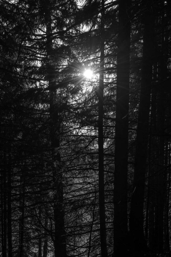 Lumière d'automne filtrée par la végétation.