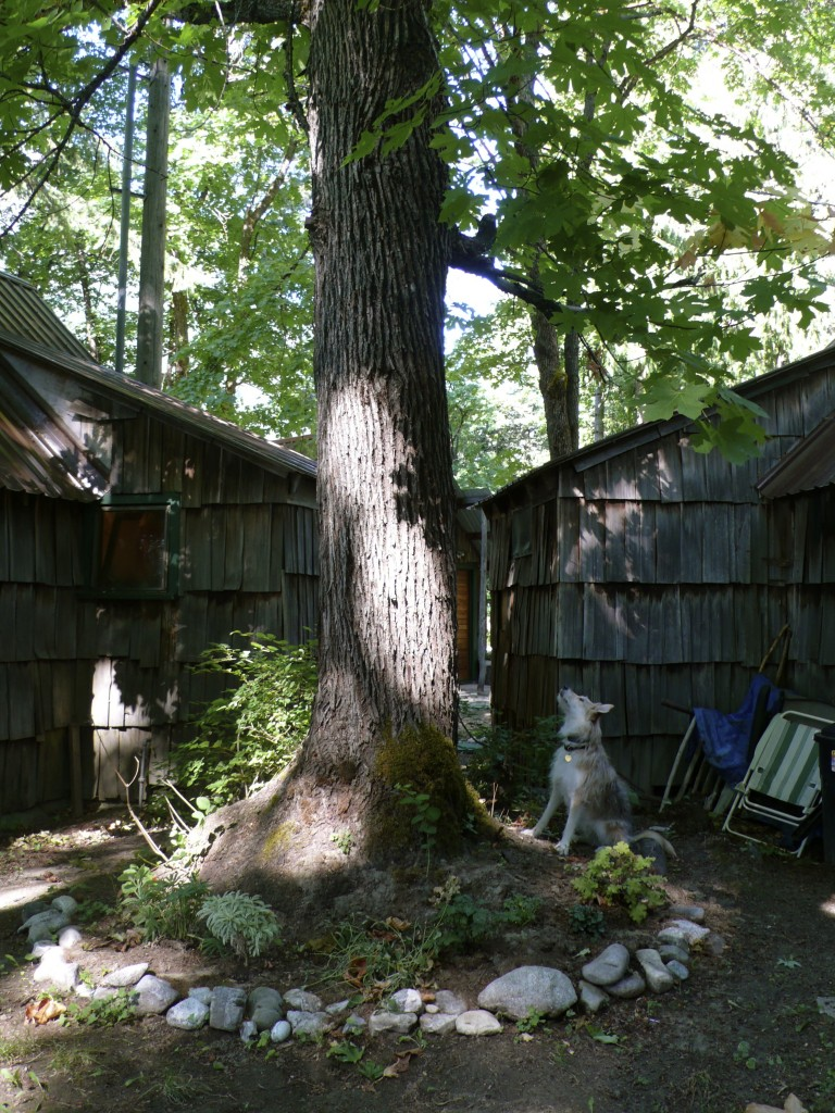 Back at the cabin, Winnie kept busy chasing squirrels up trees.
