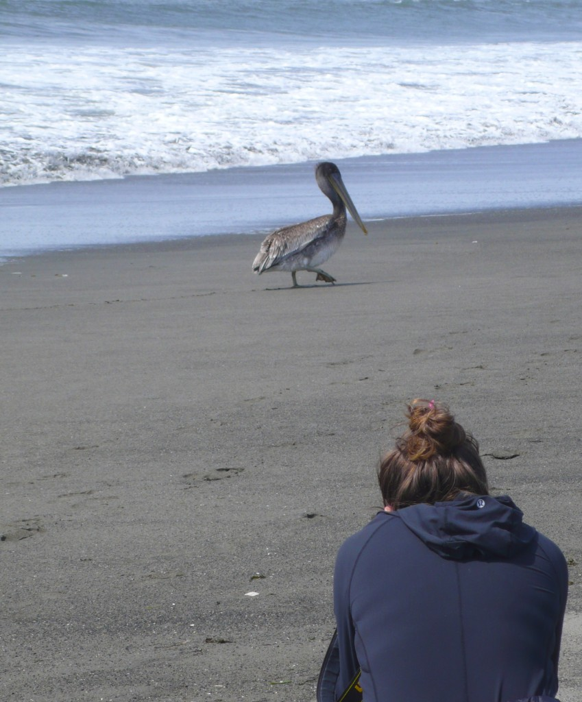 Heidi gets some close up shots of a fearless pelican (sadly, this species of pelicans is now on the list of endangered species of birds).