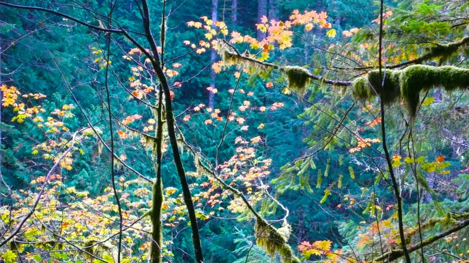 The forest leaves give way to autumn