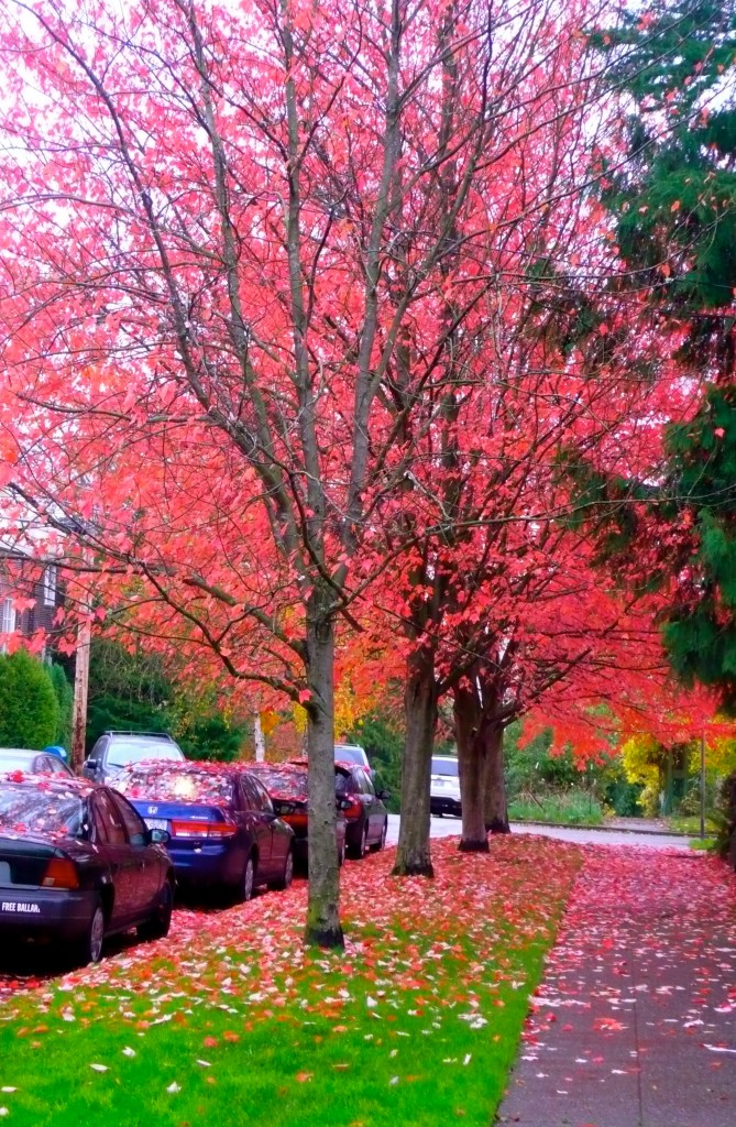 Every season has its magic...I love how the cars are covered with leaves.