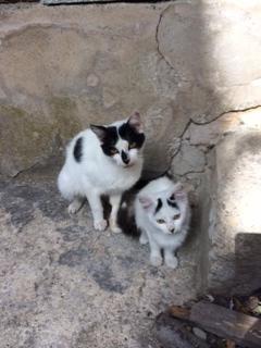 Sicilian Cats