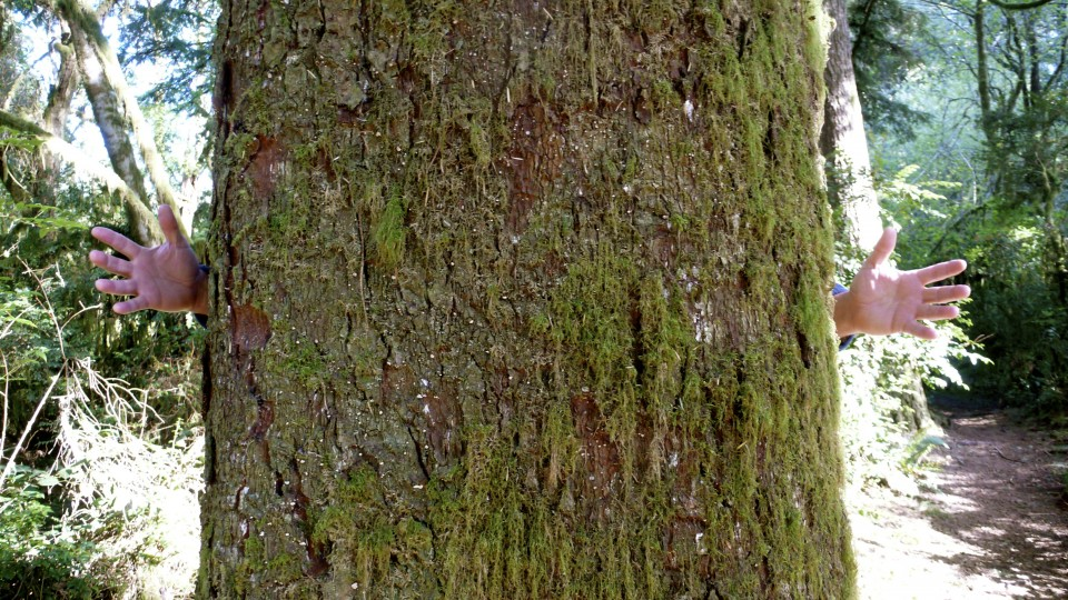 Go hug a tree!