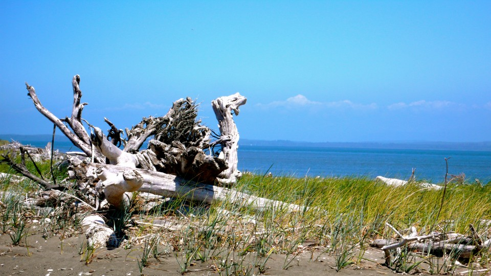 Dragon Driftwood