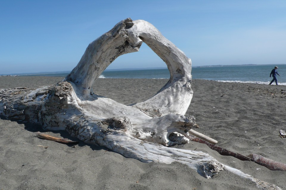 Driftwood at Protection Point, Ocean Shores