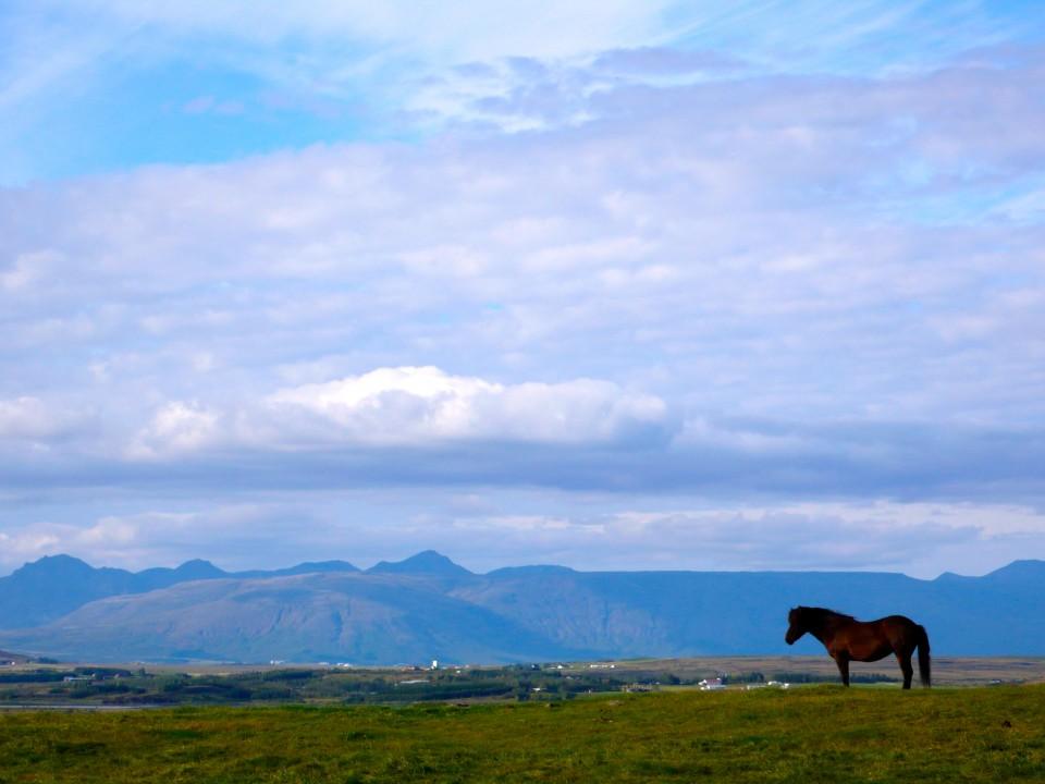 Icelandic Horse and Mountain Scene