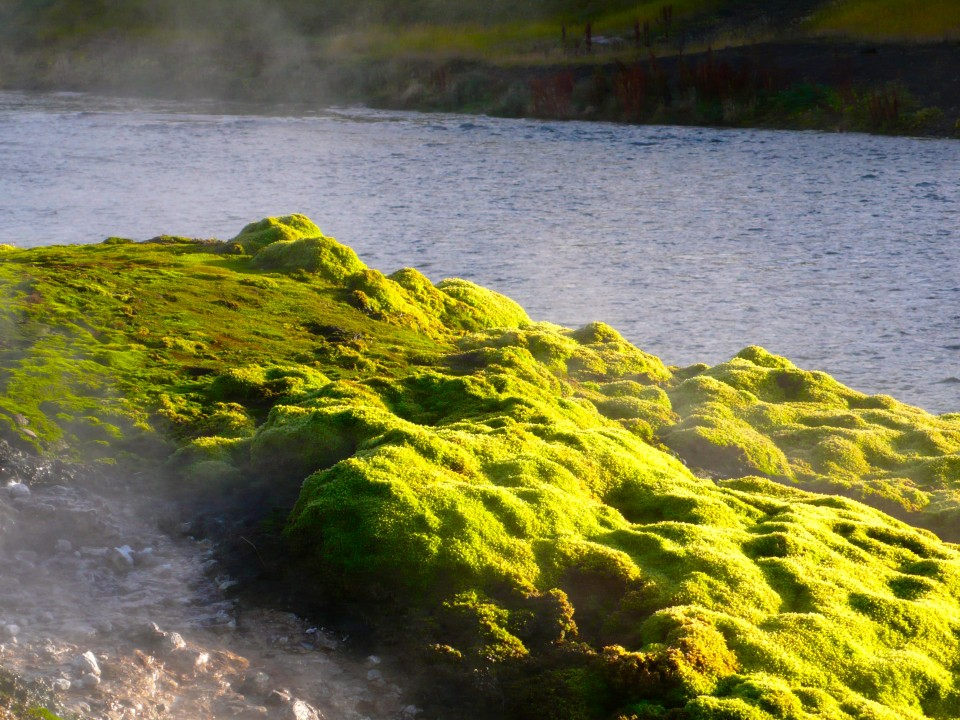 One of my favorite moss shots! Moss growing over volcanic rock at the Secret Lagoon.